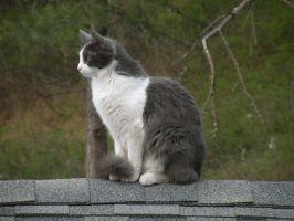 Cat Upon a Rooftop by BiohazardCreations