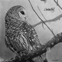 Barred Owl by dangaranart