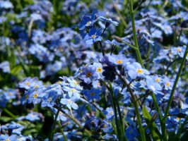 Blue flowers by Ange-d-etre