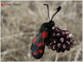 the insect by verzaubertRocken