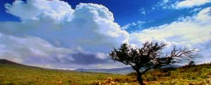 LONELY TREE by Vaskerville