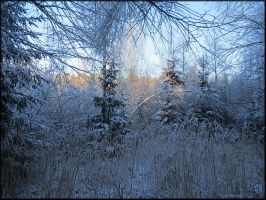 Random winterscape... by Yancis