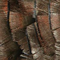 Turkey Feather Texture Tile 2 by FantasyStock