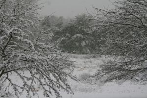 Snowy Trees and Field Stock 1b by Crematia18