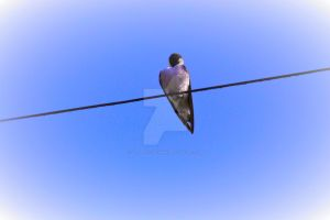 Bird On Line 4 by JLP-PHOTOGRAPHY