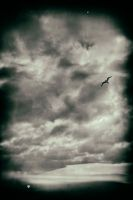 Flying Into The Storm by Bazz-photography