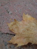 The brick leaf by thaddman