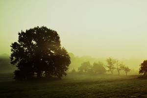 misty fields cold. by MateuszPisarski