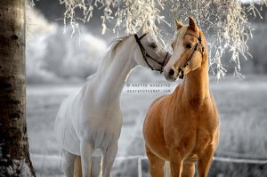 A Horse Whisper by A-Motive