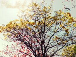 Spring by PMinelly