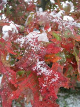 Snow covered autumn by thebcmc