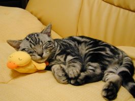 Nap with ducky by luvlotus