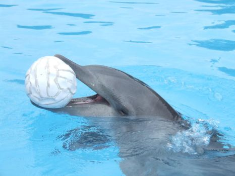 dolphin playing with ball 1 by ShotPhotGraphy