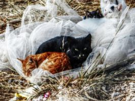 stray cats by BL00DYSunflowers