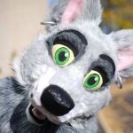 Ready for my Close-up! by SolitaryGrayWolf
