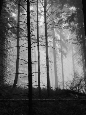 Forest No.1 by S-tiba