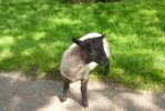 Tissington Sheep by Candyfloss-Unicorn