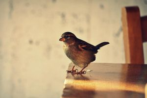 Just a sparrow. by stoxic