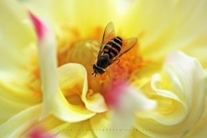 Fly, Baby by andras120