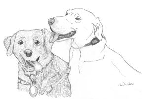 Miss dowlers Dogs by HannahLouLou