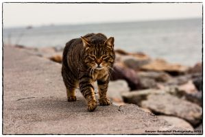 The Tiger Cat lol by kerkerecardon