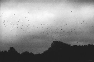 murmuration by Valentin-e-Winter