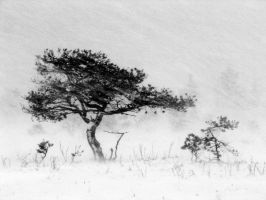9.12.2011: Alone in the Blizzard by Suensyan