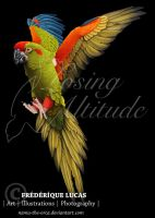 Red-fronted macaw (Ara rubrogenys) by namu-the-orca