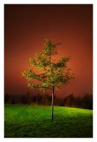 a Tree in a Night by jjuuhhaa