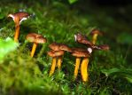 fungus 11 by LucieG-Stock