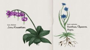Flowers by Luned
