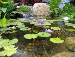 lily pond 1 by stockofshutterbugmom