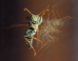 meet with a wasp by sschukina