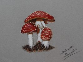 Mushrooms DRAWING by Marcello Barenghi by marcellobarenghi