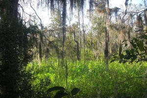 Bayou Couquille View by tobilou