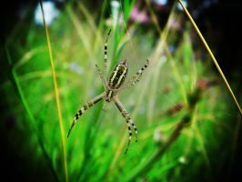 spider meadow:) by Pauline-graphics