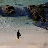 Off for a swim by AfricanObserver