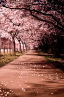 Blossom Path by Niv24