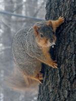 Squirrel in The Tree by TheWizardofOzzy