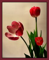 Tulips Dark by barcon53