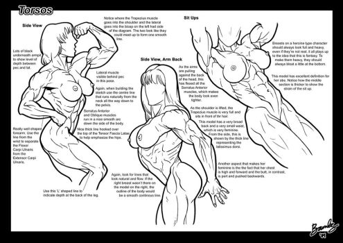 tutorial: Torsos 2 by Bambs79