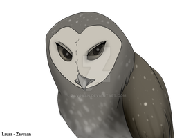 Lesser Sooty Owl by zavraan