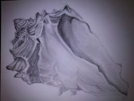 Seashell Observation Drawing (1) by SkyChow