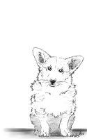 -Corgi Sketch- by WhiteSpiritWolf