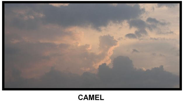 the art of heaven No.1 camel by areefeen