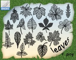 Leaves by roula33