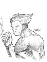 Wolverine NYCC Sketch by Arciah