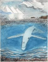 Whale Calf Ghost by DonnaBarr