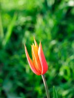 First Flowers by Vargson