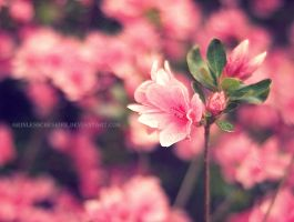 Cypress Gardens VI by PixiePoxPhotography